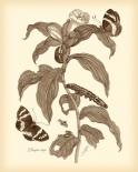 Nature Study in Sepia I