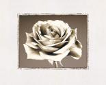 Rose - Sepia