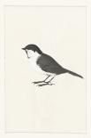 Birdy I - Anne Waltz