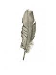 Feather I - Anne Waltz