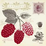 Raspberry Notes