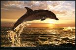 Steve Bloom - Dolphin Sunset
