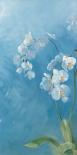 Phalaenopsis Fontaine I