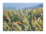 Wind-Blown Poppies