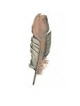 Feather II - Anne Waltz