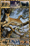 Multipic - African Wild
