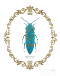 Adorning Coleoptera VIII