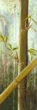 Rainforest I