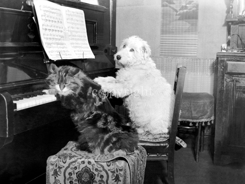 Cat and Dog playing Piano