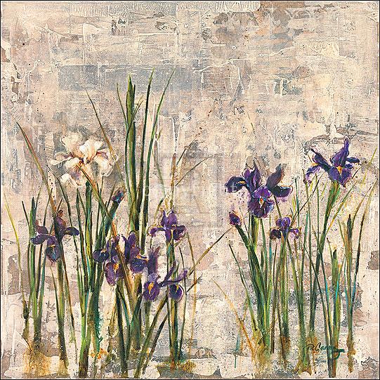 Iris Mist II